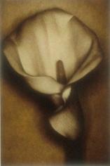 Calla, 2000, 31-3/8 x 23 Fresson Print, Ed. 15
