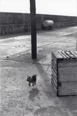 Ballycotton, Eire, Ireland, (Levitating Dog), 1968, 20 x 16 Silver Gelatin Photograph