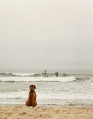 Beach Dog, Ditch Plains, 20 x 16 Chromogenic Print