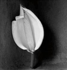 Pinanona, 11 x 14 Silver Gelatin Photograph