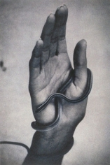 Hand with Snake, 1994, 16-1/4 x 12-1/8 Fresson Print, Ed. 15