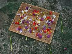abelardo morell flowers for lisa 18 in monets gardens giverny france