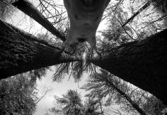 Arno Rafael Minkkinen Leap Before You Look Pachaug Connecticut