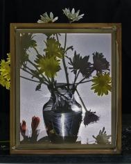 abelardo morell flowers for lisa 19