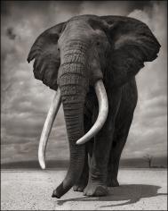 nick brandt elephant on bare earth amboseli