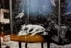 sebastiaan bremer little cat in studio