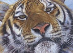 Face to Face (Amur Tiger)