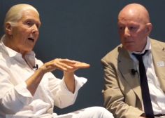 Harmony Hammond in conversation with Holland Cotter (2019).