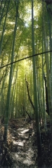 WIM WENDERS Bamboo Forest, Nara, Japan