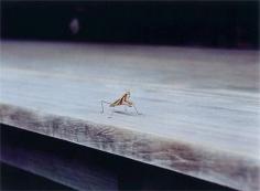 WIM WENDERS Praying Mantis, Nara, Japan