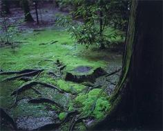 WIM WENDERS Mossy Ground, Nara, Japan,