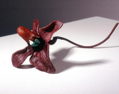 Keith's Paphiopedilum (Version One)