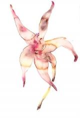 Pink Flower (2012)