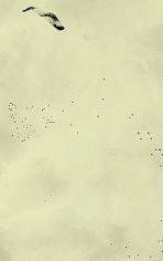 Adam Chapman, Starling Drawings/Drawing #11 (Video Still 1), 2008