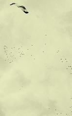 Adam Chapman, Starling Drawings/Drawing #11 (Video Still 1), 2008