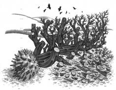Eric Beltz, Noah's Shipwreck (2011)