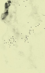 Adam Chapman, Starling Drawings/Drawing #9 (Video Still 1), 2008