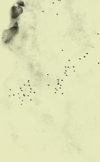 Adam Chapman, Starling Drawings/Drawing #9 (Video Still 1), 2008