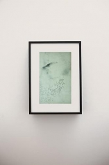 Adam Chapman: Starling Drawings