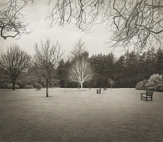 Lawn, Hall Place, from the series In the Garden, 2001, platinum print, 16 x 18 1/2 inches