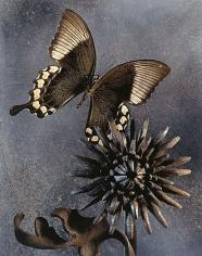Underneath the Papillon, 2000