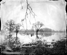 Flooded Oaks 2010