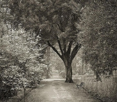 Path, Giardino dei Semplici, Florence, from the series In the Garden, 2001, platinum print, 16 x 18 1/2 inches