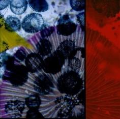 sio2 chromogenic print mounted on aluminum