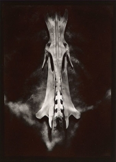 Evidence, 1977, From Ephemera Portfolio, Toned gelatin silver print, 7 1/4 x 5 1/4 inches