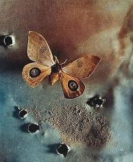 Automeris randa, 2000