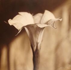 Moon Flower, Sacred Natura, hand-colored gelatin silver print