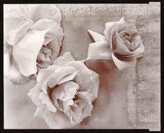 Roses, 1980, From Lost Objects Portfolio, Toned gelatin silver print, 8 x 10 inches