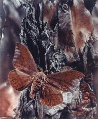 Eaclis Imperialis Nobilis Beseiged, 2000