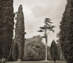 Trees, Blenheim Palace, from the series In the Garden, 2004, platinum print, 16 x 18 1/2 inches
