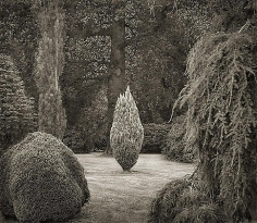 Clearing, Wakehurst Place, from the series In the Garden, 2004, platinum print, 16 x 18 1/2 inches