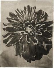 "Dahlia, from the series ""Reconstructions,""platinum palladium print on handmade Japanese gampi, sewn on Japanese washi"