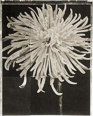 "Spidermum, from the series ""Reconstructions,""platinum palladium print on handmade Japanese gampi, sewn on Japanese washi"