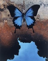 Papilionidae Ulysses Reflecting The Sea, 2000
