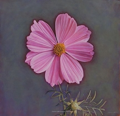Cosmos II, hand-colored gelatin silver print, 32 x 32 inches