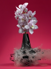 Untitled (Orchidaceae II), 2007