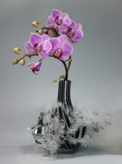 Untitled (Orchidaceae IV), 2007