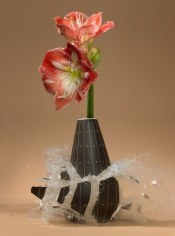 Untitled (Amaryllis III), 2007