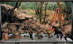 Diorama with Bobcat Removal, San Francisco, 2005