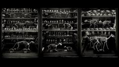 Animal Logic Triptych, 2002