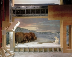 Diorama with Yak, Ottawa, 2007