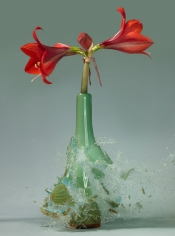 Untitled (Amaryllis IV), 2007