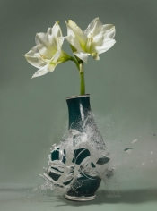 Untitled (Amaryllis II), 2007