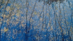 Stu Murphy, Blue Poles, 2018, Aerial photo of wetlands near Grafton NSW