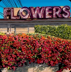 David McKay  Flowers on Hillhurst, 2017