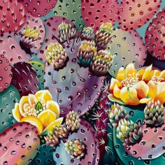 David McKay  Pink Prickly Pear, 2018